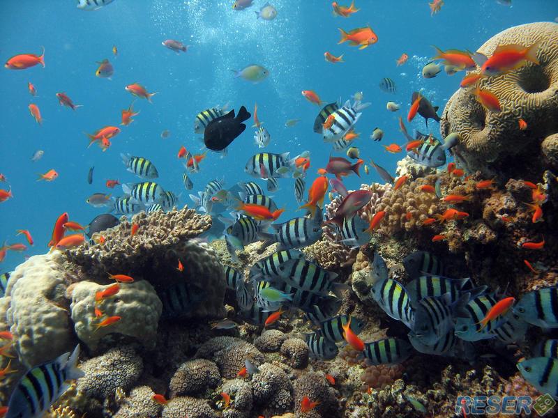 Ett livligt korallrev med många fiskar i bahamas